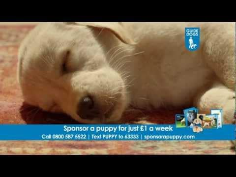 Guide Dogs TV campaign